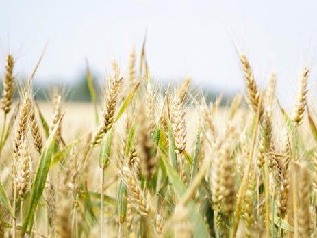 Teravilja tähtsus inimese elus